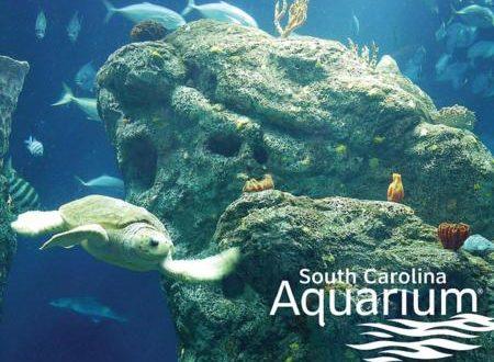 sc_aquarium
